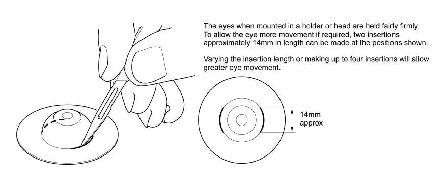 Eye Movement Insertions.pdf